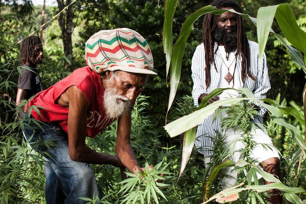 Конопля в религиях купить марихуану в кирове