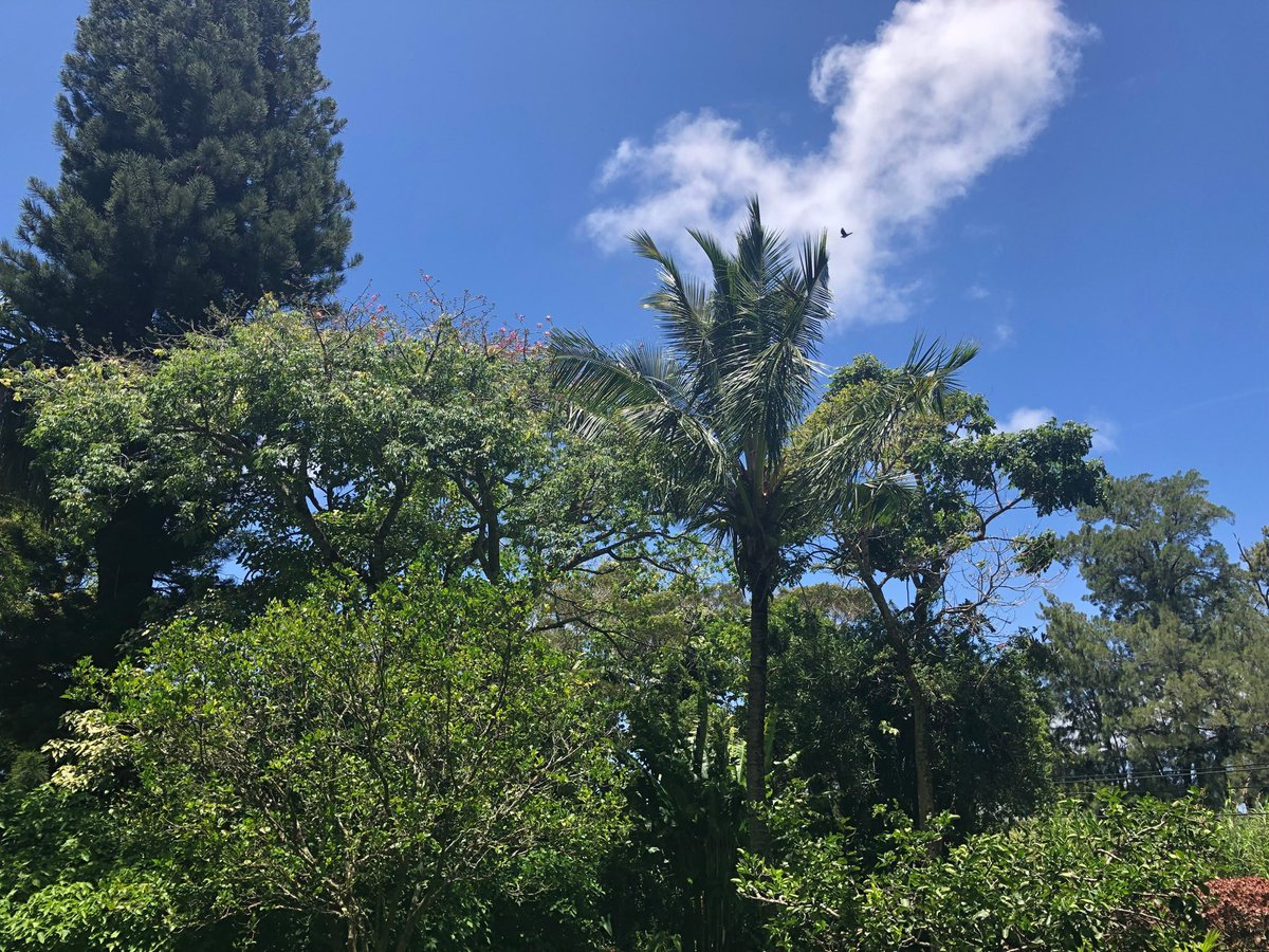 test Twitter Media - Hot and mostly clear in haiku. #cmweather #Maui https://t.co/9MDbYZDtED