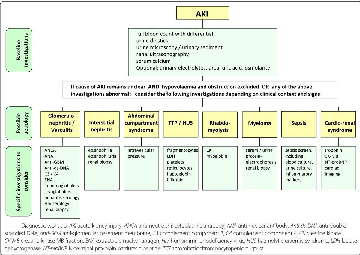 Insuficiencia renal aguda medicina interna