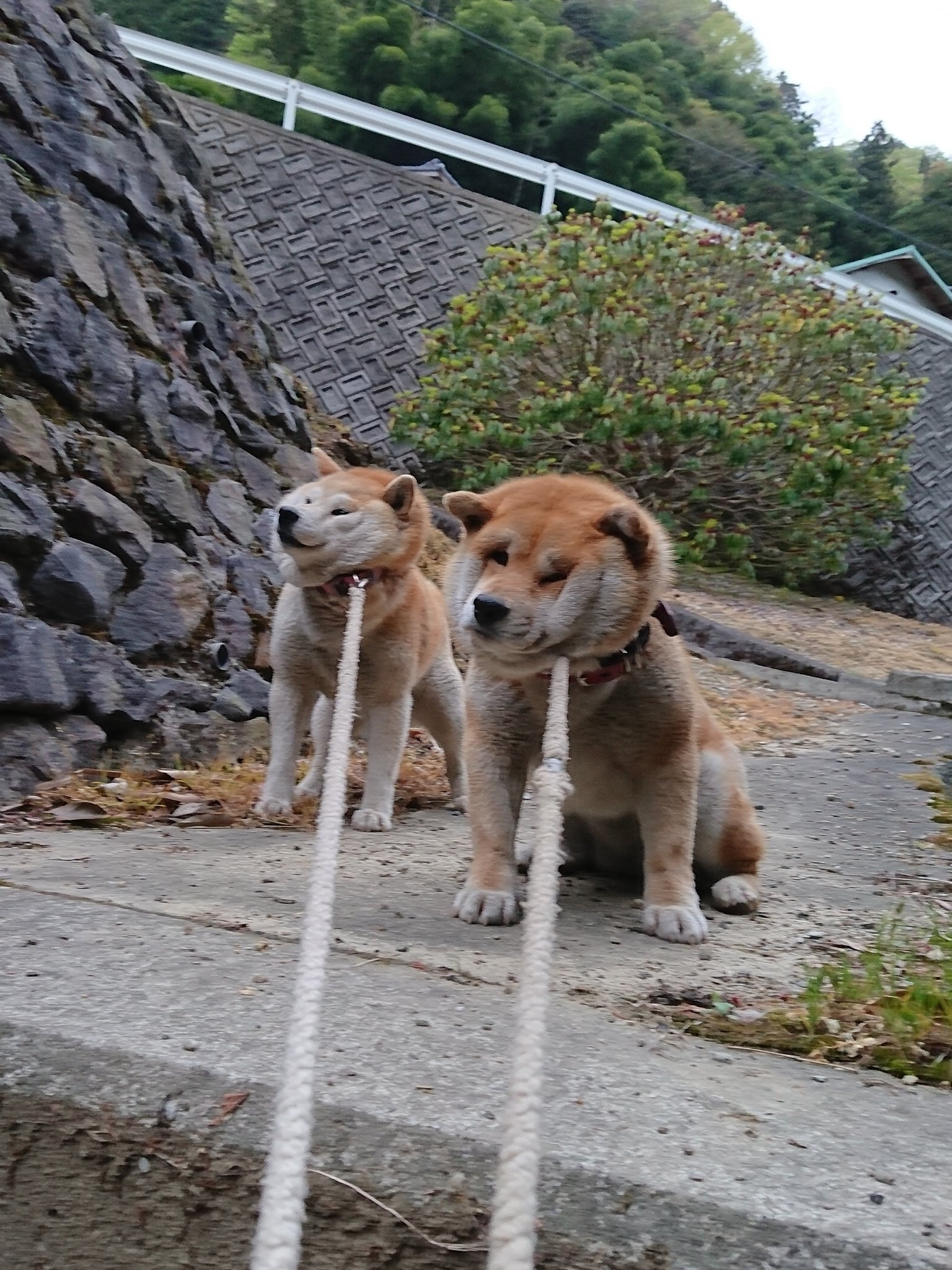 そんなに嫌なのw一歩も動きたくない『拒否犬』2匹の破壊力!