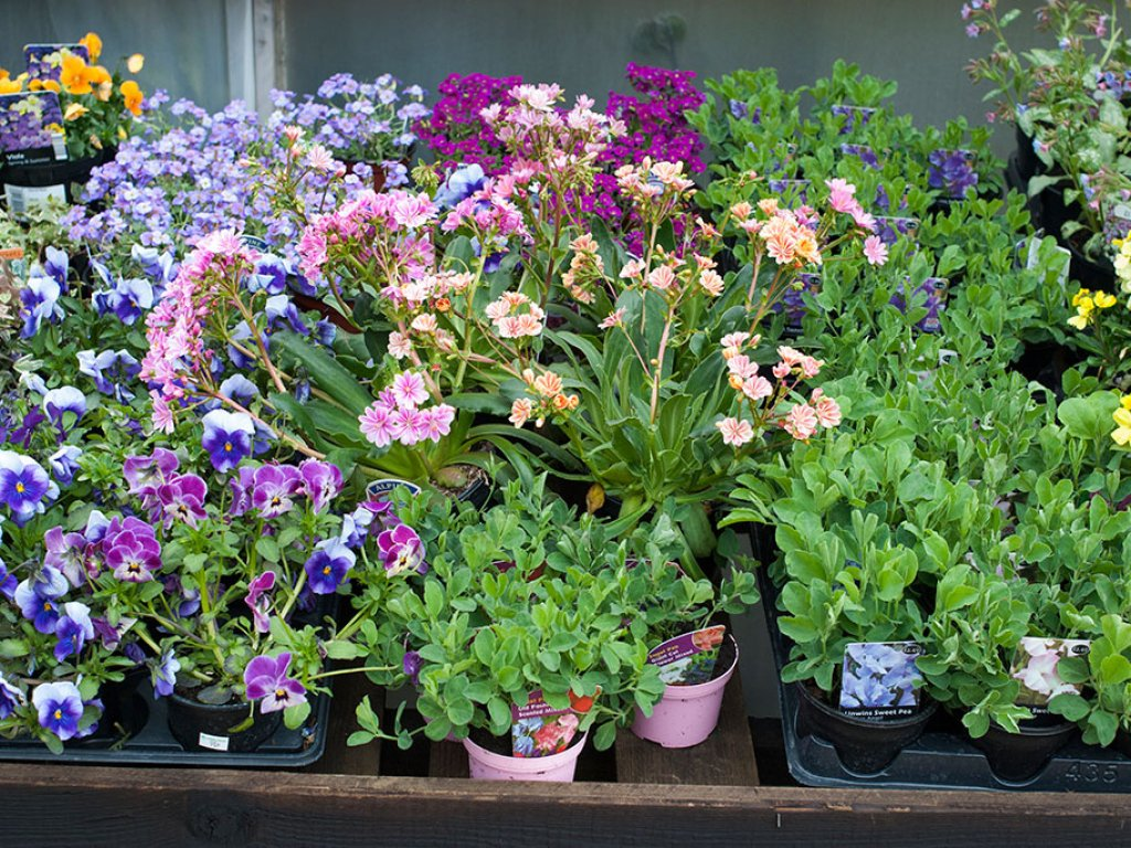 https://t.co/wbOuUQtQmz If you're after herbaceous perennials then our Spring Garden Show is the place to be! We have @placeforplants exhibiting with us bringing a host of gorgeous plants. 20-22 April - weather's going to be great too!