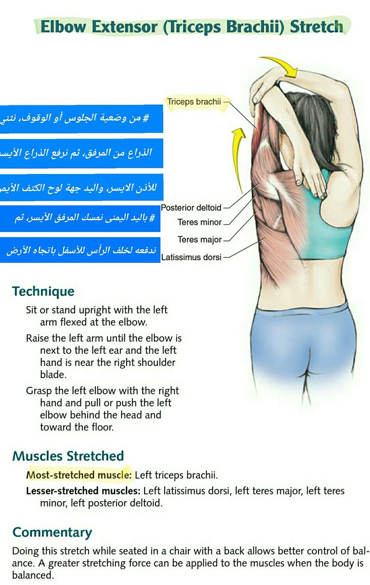Exelent Left Deltoid Frieze - Human Anatomy Images - fullthreadahead.com