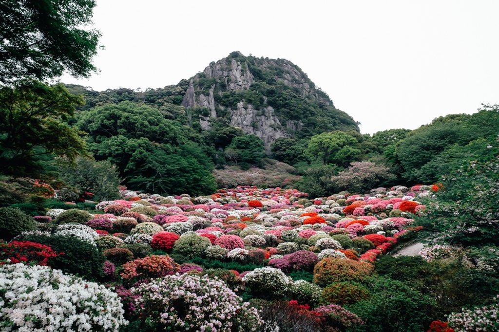 この風景が見れるのは、1年のうち数日間だけ! 20万本のツツジが咲き乱れる御船山楽園の「ツツジ谷」が美しかった。