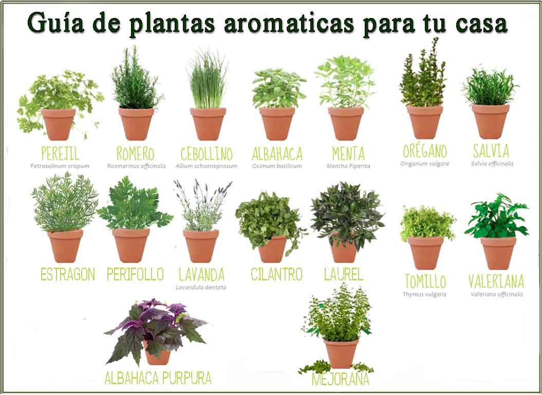 Etsiaab on twitter te apetece cultivar tus propias - Clase de flores y sus nombres ...