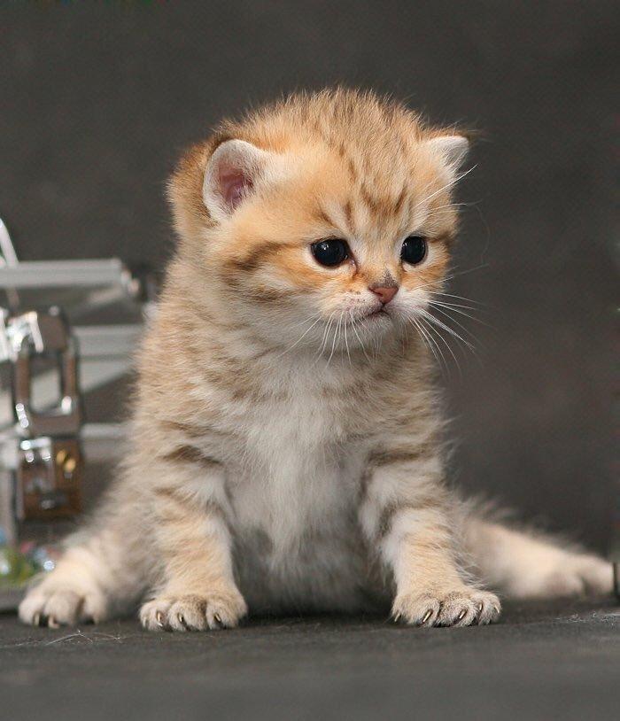 Картинки с котенком с надписями