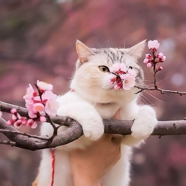 @Emel7103 Saolll Aşkım. İnşALLAH Nice Mutlu Yıllara Beraber Saglikla Huzurla Gireriz ????❤????