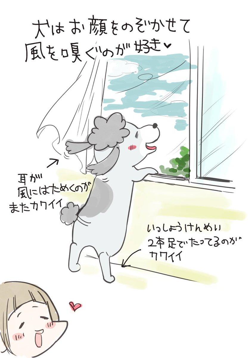 犬と猫、風の感じ方の違い