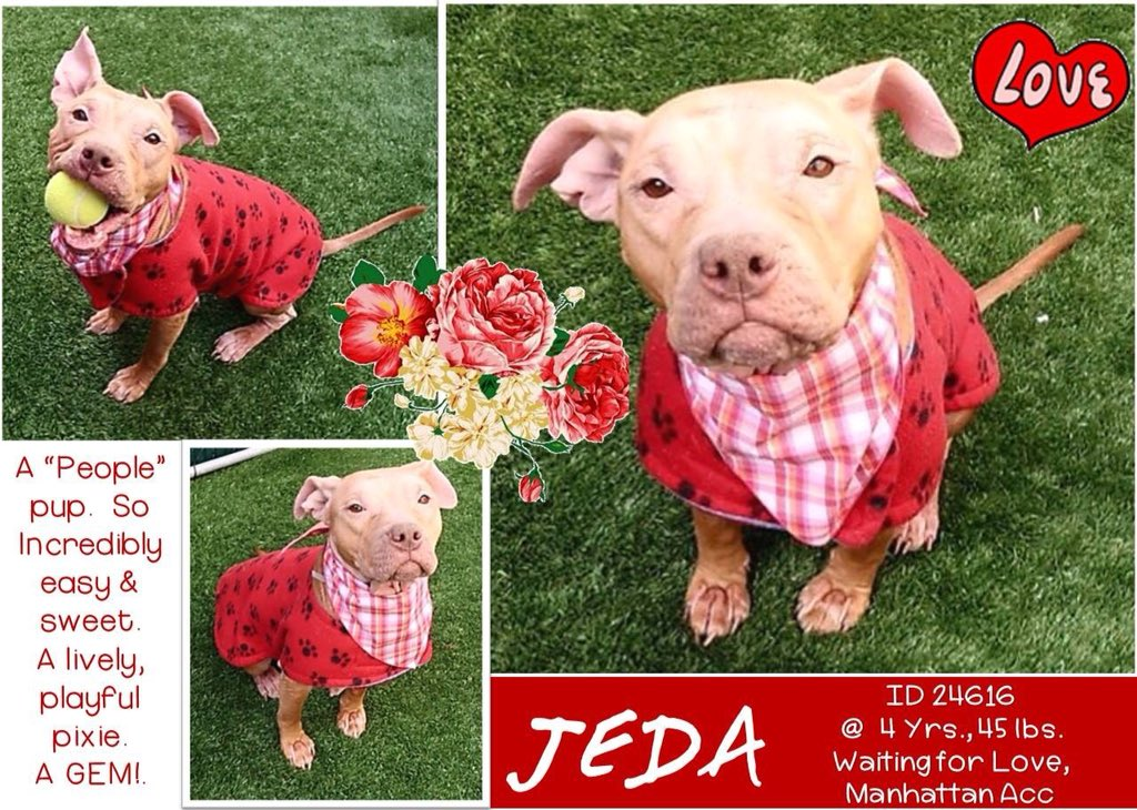 ADORABLE #JEDA SHOULD BE WITH A LOVING FAMILY INSTEAD OF CONDEMNED BY #NYCACC FOR A TREATABLE #COLD!  #RESCUEDOGS #FOREVERHOME #FOSTER #ADOPT #SAVEALIFE #CIRDC #EndBSL #RescueIsTheWayToGo  #HumaneNY  #SaveJEDA  https://www. facebook.com/mldsavingnycdo gs/photos/a.428526917333584.1073742030.112453902274222/707927446060195/?type=3 &nbsp; … <br>http://pic.twitter.com/O1hu3QfPw0