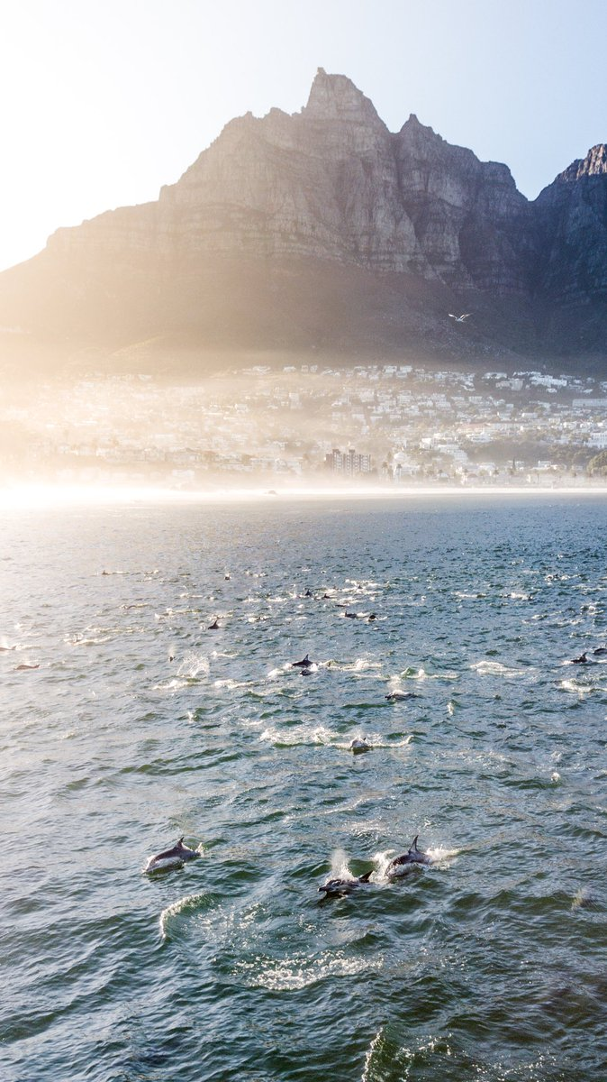 Good morning Cape Town. Sunrise Autumn Drone flight and spotted some dolphins in Camps Bay. #dji #MavicPro<br>http://pic.twitter.com/9201ZI8EP4
