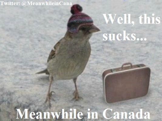 Meanwhile in Canada's photo on #snowday