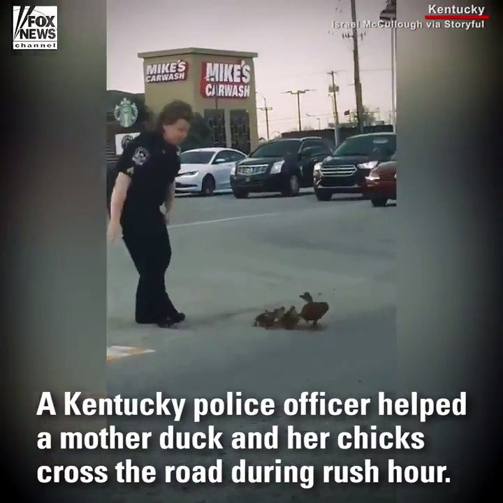 A Kentucky police officer helped a mother duck and her babies cross the road https://t.co/K6cuzQ1EPw