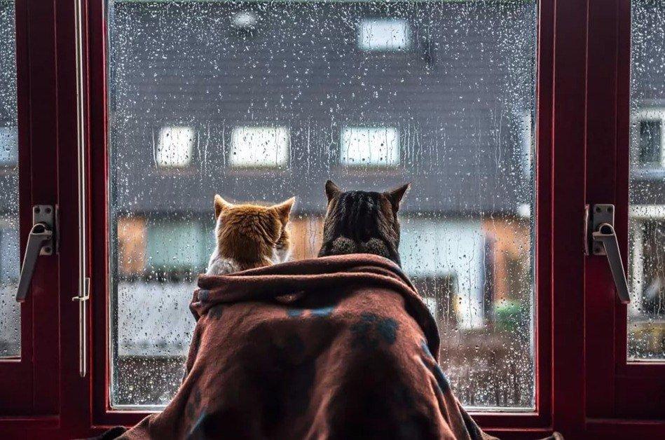 Картинки анимации хорошего дня если даже на улице дождь