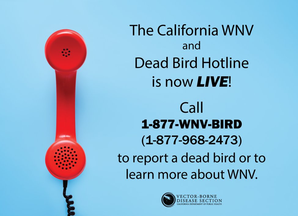 A dead bird near your home may be a sign of West Nile virus (WNV) in your area. Call the WNV hotline to report a dead bird — your reports help us track and prevent WNV in California! Call 1-877-WNV-BIRD or visit https://t.co/h37DxO6pxO. #MosquitoAwarenessWeek