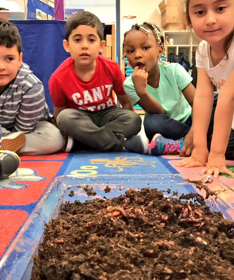 The past few days we have been learning about what living things need to grow and about worms and their way of life.  🌱☀️🌧 🐛 <a target='_blank' href='http://search.twitter.com/search?q=HFBTweets'><a target='_blank' href='https://twitter.com/hashtag/HFBTweets?src=hash'>#HFBTweets</a></a> <a target='_blank' href='https://t.co/stGh8wycBY'>https://t.co/stGh8wycBY</a>