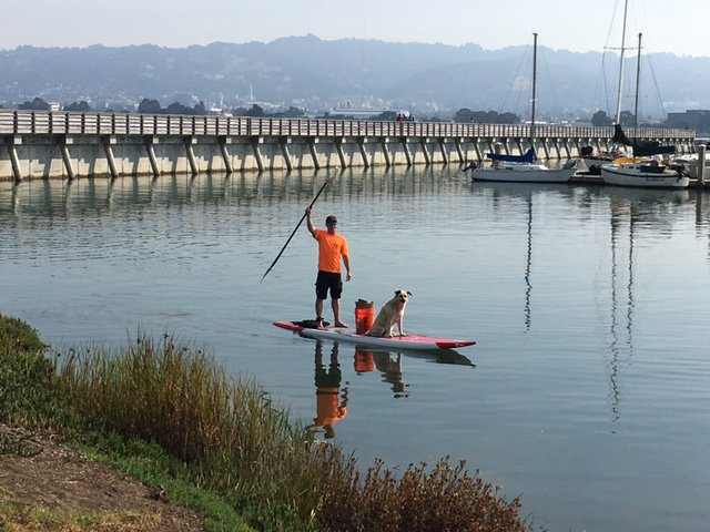 Every September we coordinate California Coastal Cleanup Day, the largest one-day volunteer event in the US. But those who really do the work are the local groups and individuals at the beaches and creeks and parks. THANK YOU. #NationalVolunteerWeek #NationalVolunteerWeek2018 <br>http://pic.twitter.com/504REhTCW9