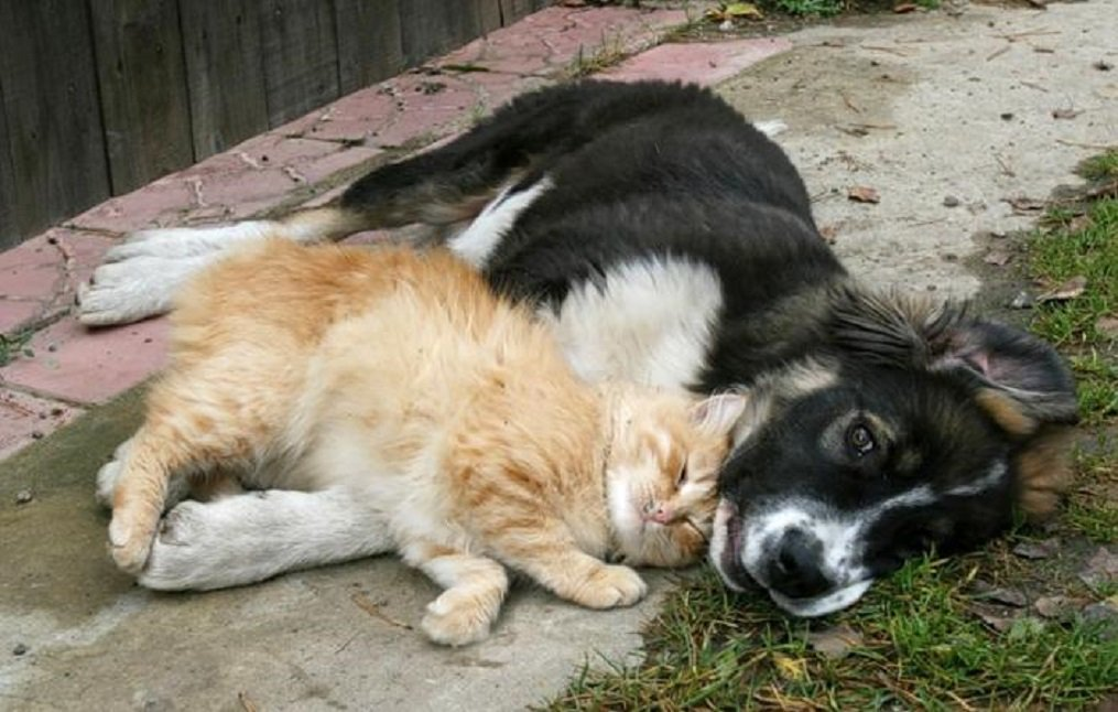 Открытки, картинки котят и щенков с надписями