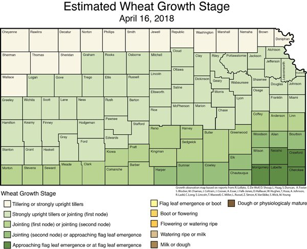 Here's an update on the risk of #freeze damage to @KansasWheat after the cold temperatures during April 14-16. #Wheat    https:// ksu.ag/2HDOVjA  &nbsp;    @KStateAgron @KSRE_pubs_guy @aarhar @WEDCrops @GPGrazing @GBCoopSeed @ksmesonet<br>http://pic.twitter.com/ZTgT856Iq2