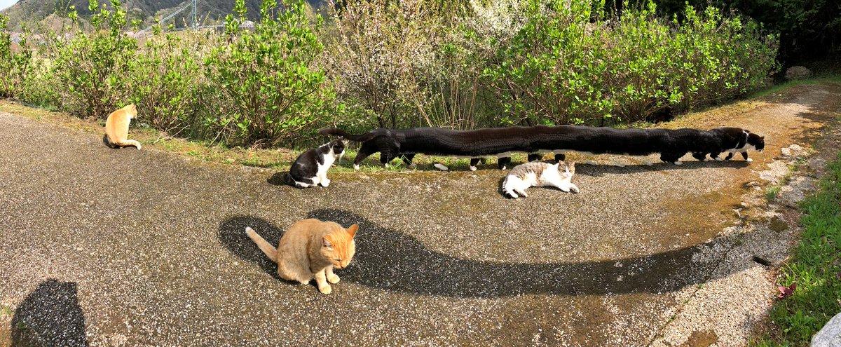 猫ちゃんたち全部撮りたくてパノラマ撮影したら一匹歩き出して凄いことになった🌈