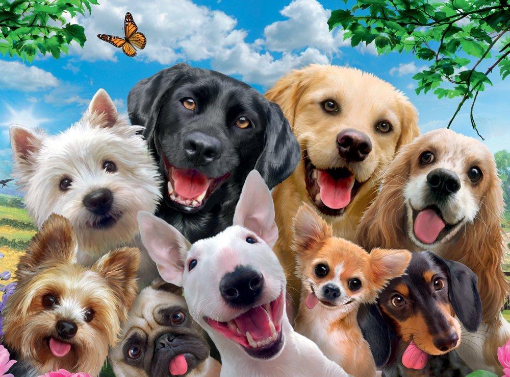 украшены картинки для сайта про животных если планируете снимать