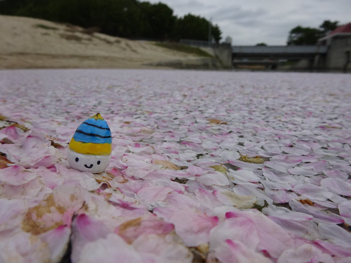 山口県光市は ぽつぽつだけど ひさしぶりの雨♬  いっきに桜も散りはじめ。。。