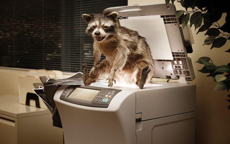 животные в офисе картинки воздуха наземным целях