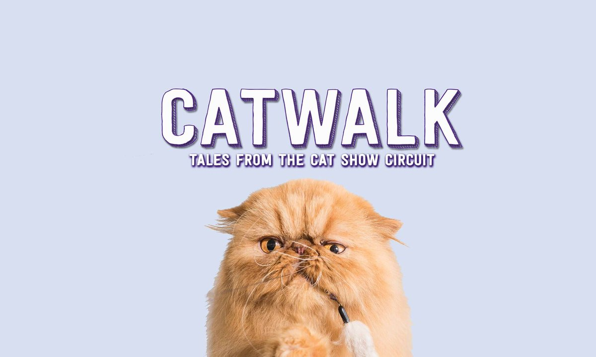 Show Circuit April Issue Tintucmoi The Theshowcircuit Twitter Cat On 18 Screening Room Kingston Part Of Canfilmday Catwalkdoc Catfilmday Markhamstreet Kingstonarescue Visitkingston1
