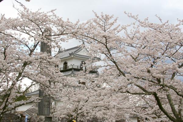 きょう4月6日は4(し)6(ろ)で「白の日」で「城の日」でもあるそうです 伊達政宗公の無二の忠臣で知勇兼備の智将・片倉小十郎の居城でした宮城県白石市にあります「白石城」ではこの時期に桜の季節をむかえます #白の日 #城の日