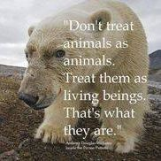 MY Dream is for ALL Animal Living Beings to be FFREE and at Peace !!! Damn HUmans! #DreamStillLives