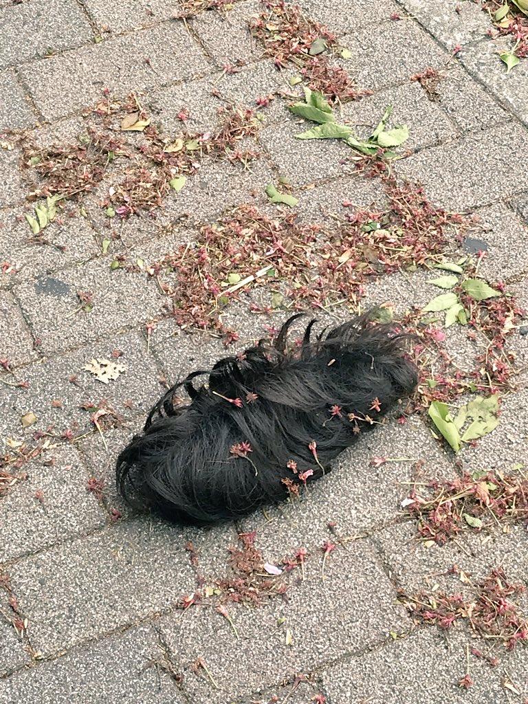 強風が起こした悲劇を目撃した