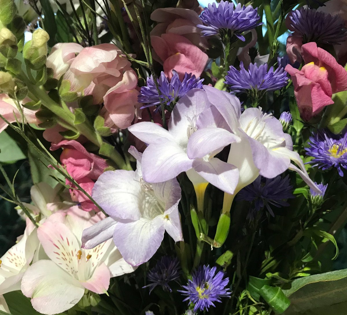 Helen Mccarthy On Twitter Some Beautiful Flowers For You My