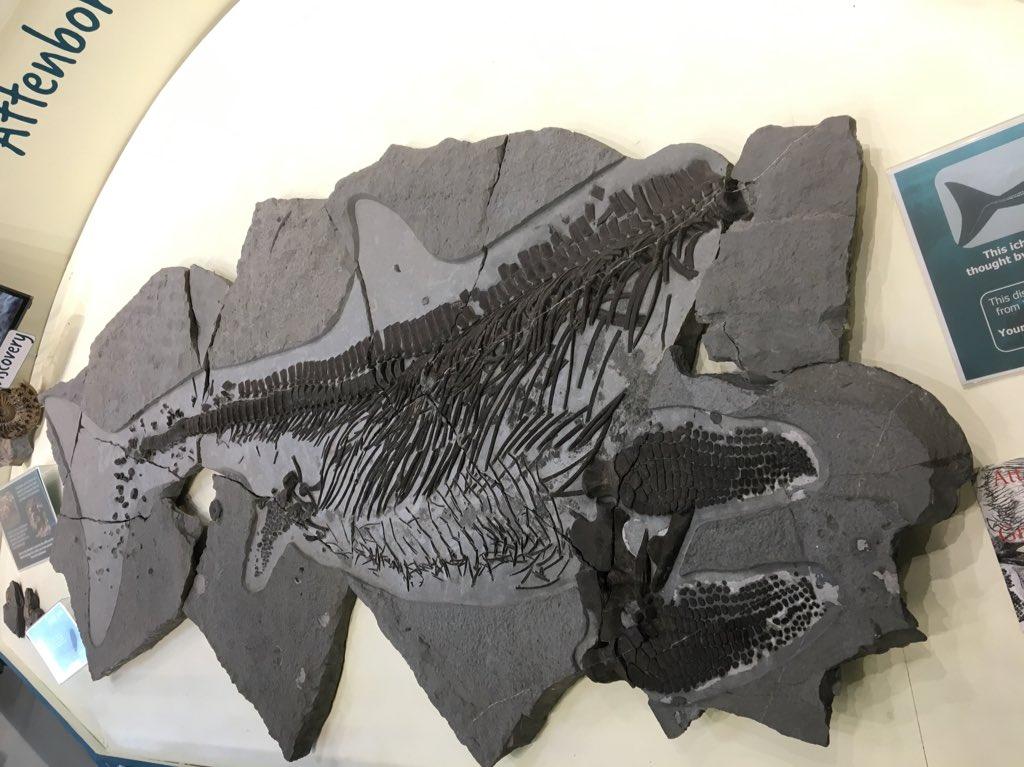 Phil Gilmartin On Twitter 4 5m 200my Old Ichthyosaur Head Bitten