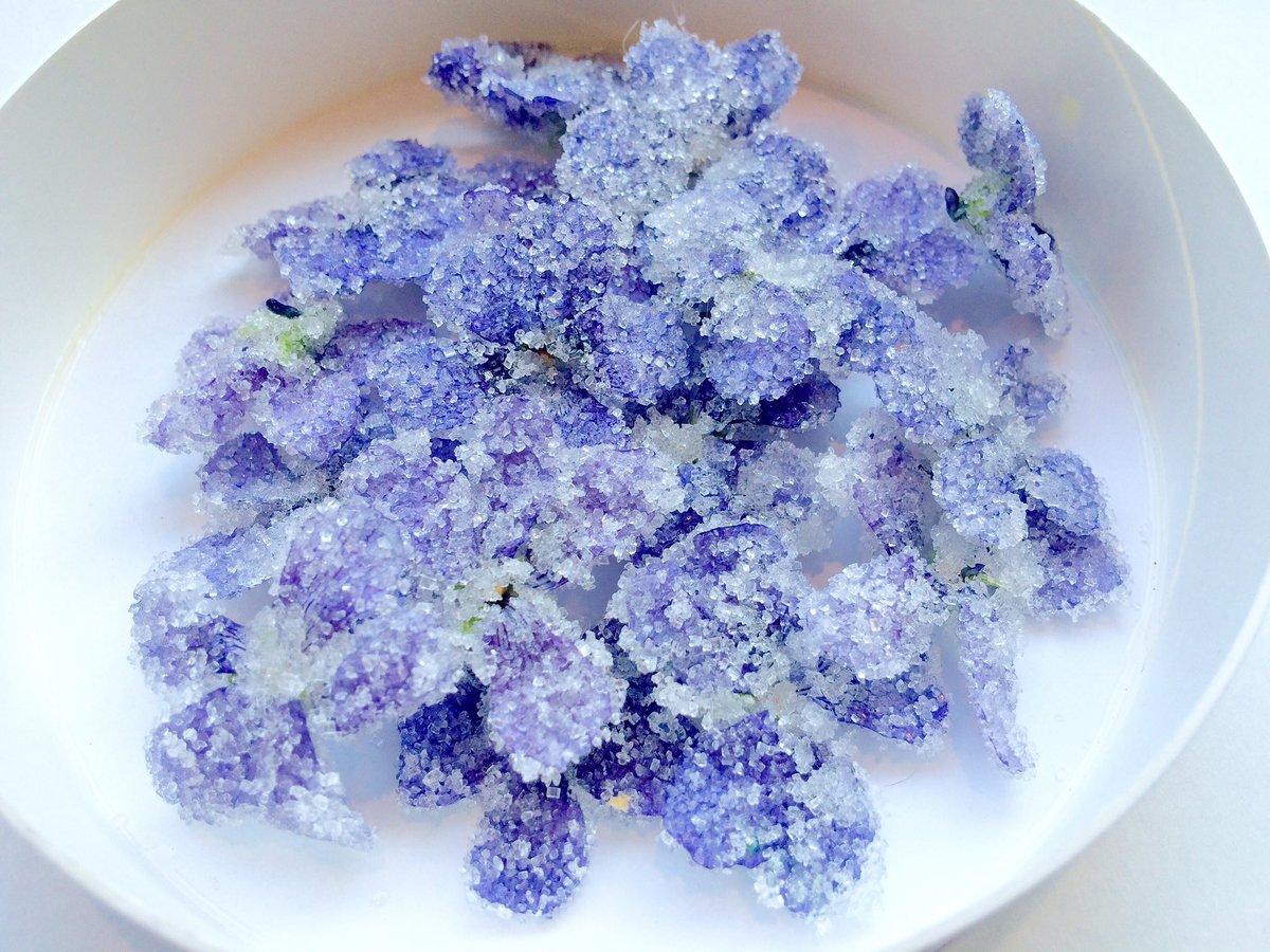 スミレのクッキーと砂糖漬けを作りました。さわやかな春の紫。