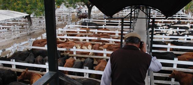 #Hacienda | Las #cotizaciones del #MercadodeLiniers del 30 / 10 / 18