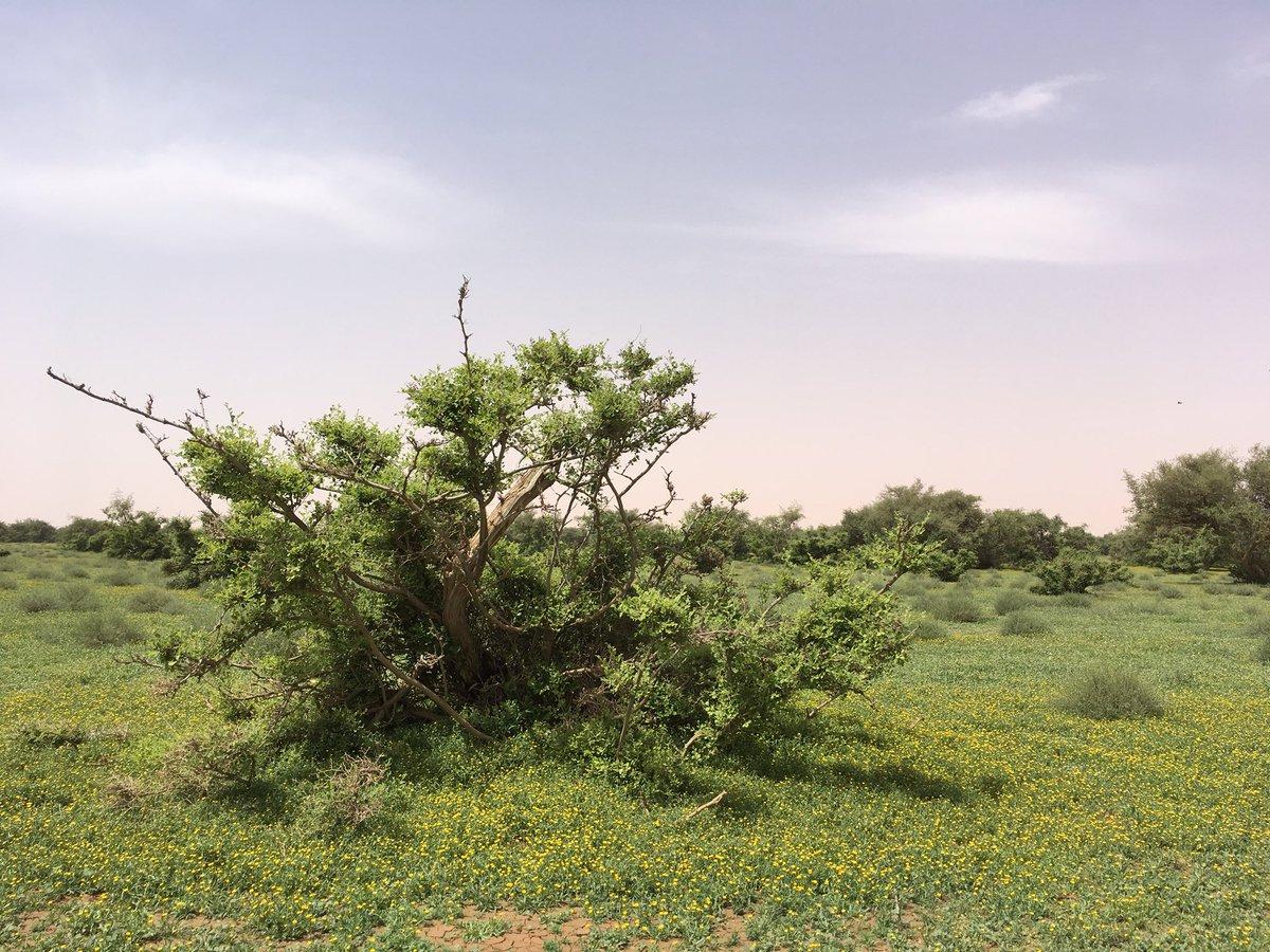 روضة التنهات 1439 صور ربيع