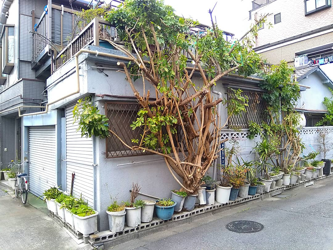 こんなに力強い植木鉢は初めて見た