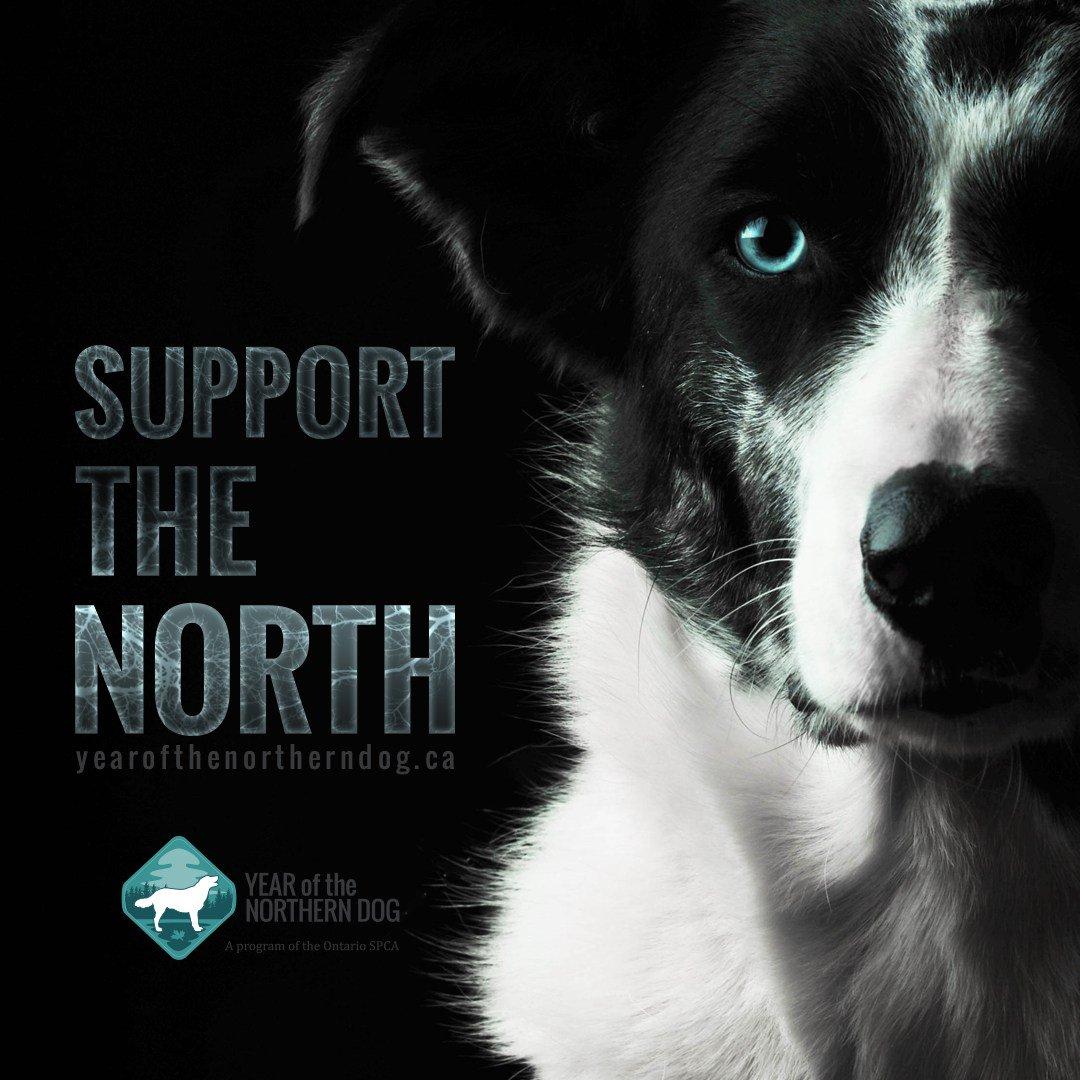 OSPCA (Ontario SPCA) on Twitter: