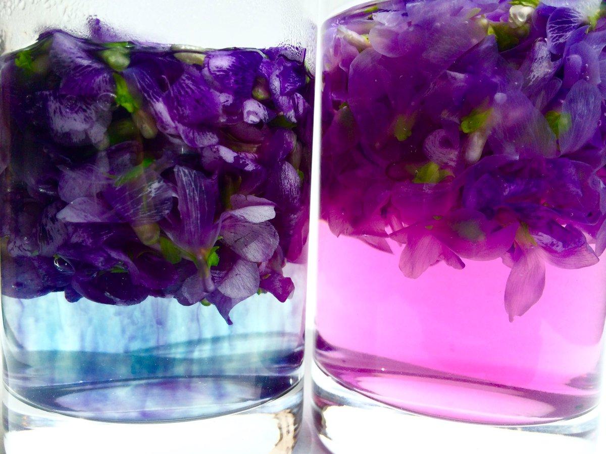 スミレシロップも作りました。 洗ったスミレの花に熱湯をかけると、色が抜け出します。レモン汁を入れると赤紫色になります。しっかりと色が出たら、花を取り除き、砂糖を加え火にかけます。  炭酸水で割ると、スミレ色のソーダ。