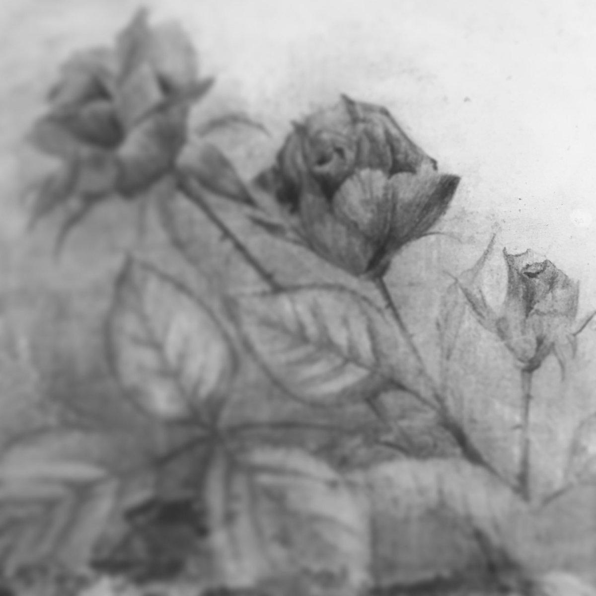 薔薇 貧者 の