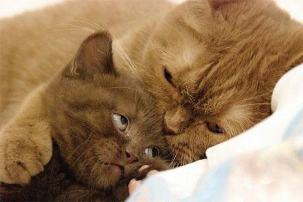 Картинка кошечка моя люблю тебя ну а ты меня