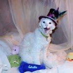 Image for the Tweet beginning: Happy gotcha day! Bisquit!!  #Biscuits1stgotchadaybdaypawty