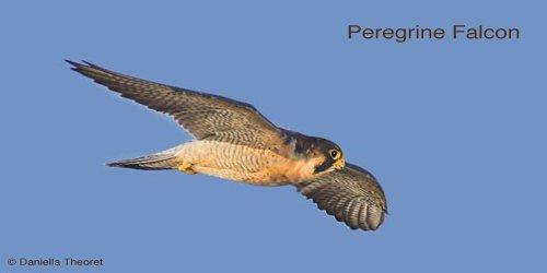 Birds of Prey Photo
