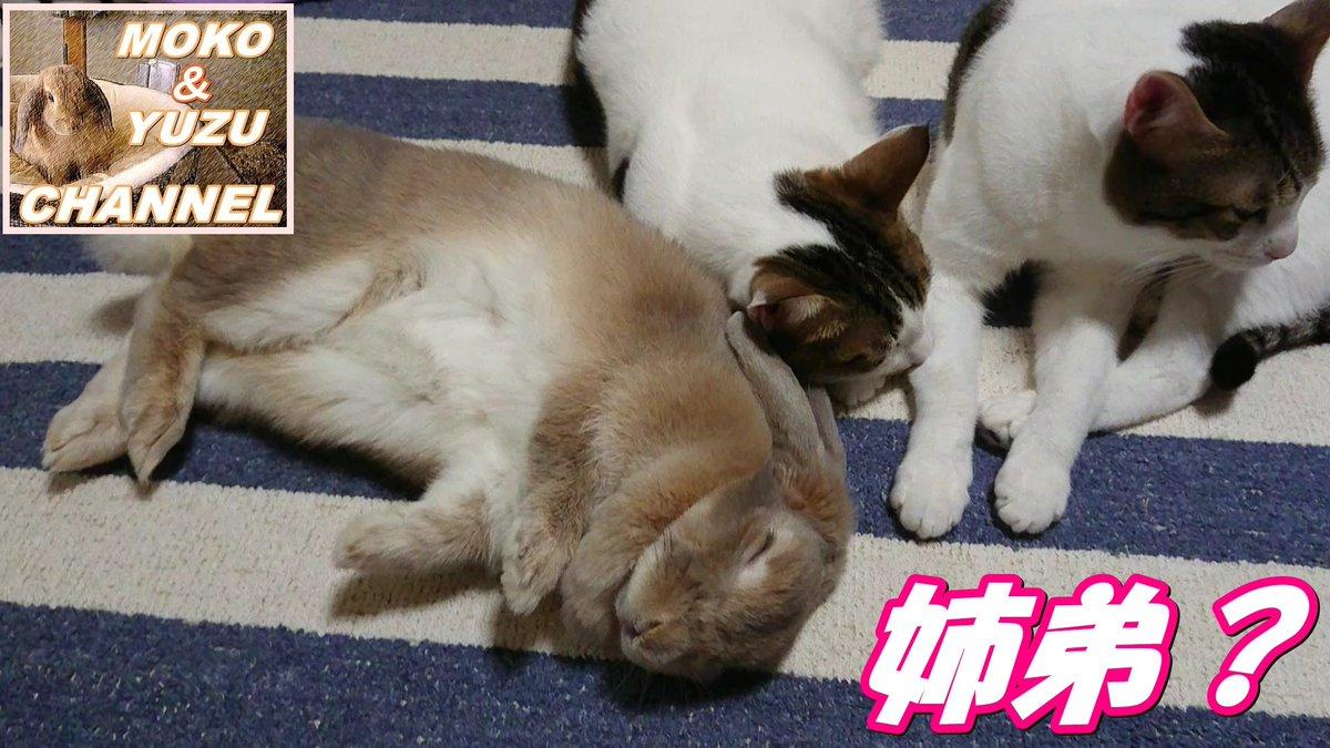 #猫とうさぎ hashtag on Twitter