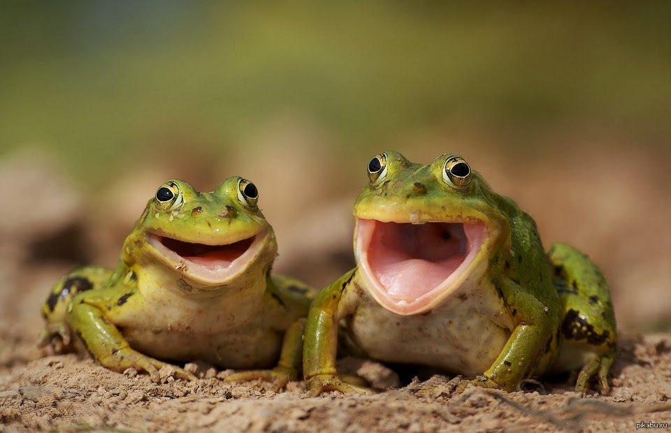 Мужчин, картинки с надписью лягушки