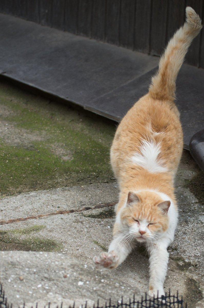 猫ジャンプの行程。 ①準備体操する②狙いを定める③重力に逆らう④ドヤ顔をする#猫好き #野良猫 #猫好きさんと繋がりたい #猫ジャンプ  pic.twitter.com/vXPzv5CBEo
