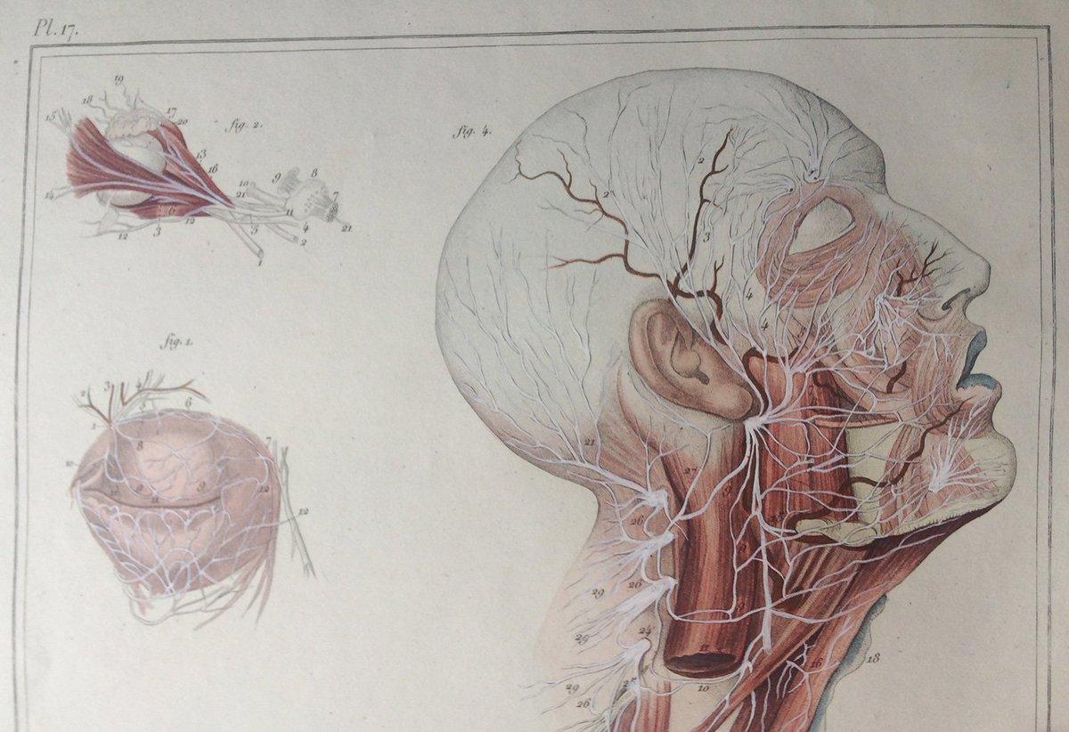 Berühmt Weibliche Menschliches Körperbild Organe Bilder ...
