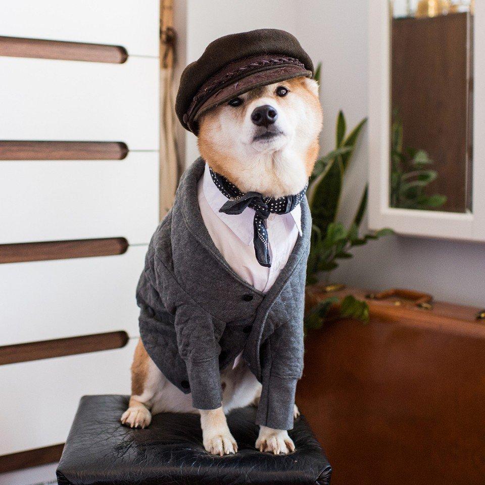 Картинки с модными собаками