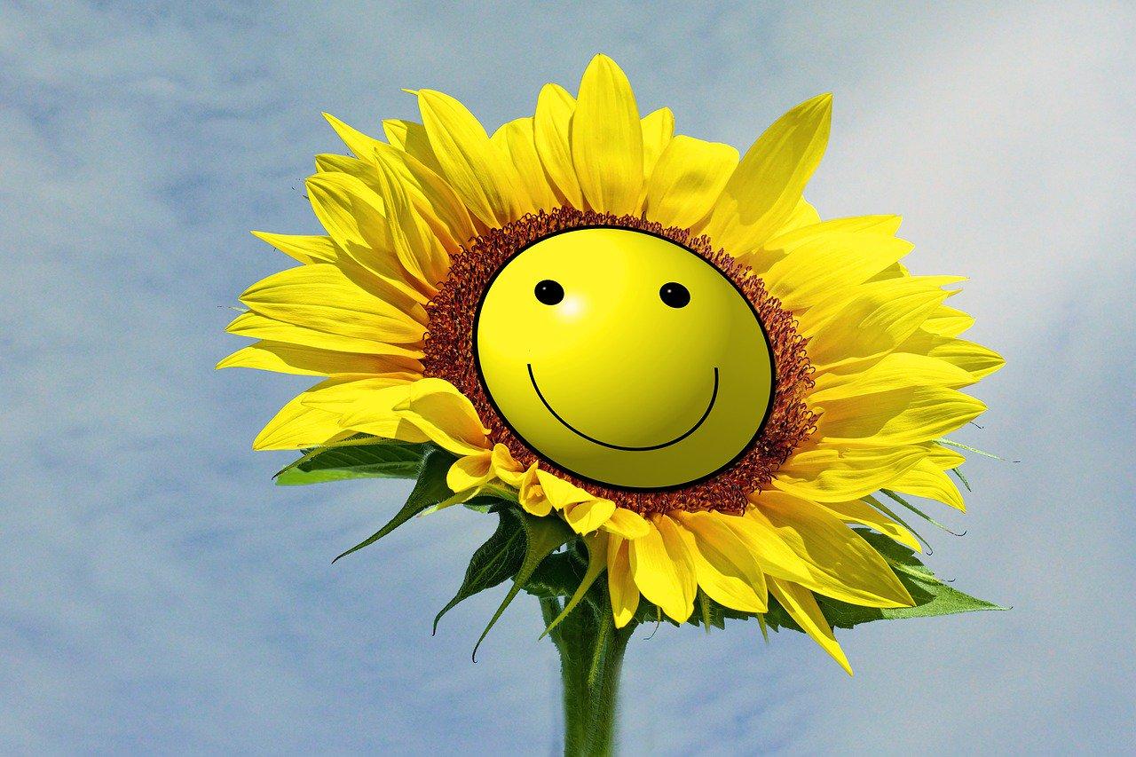 картинка цветы улыбаются игрушка обезьянка