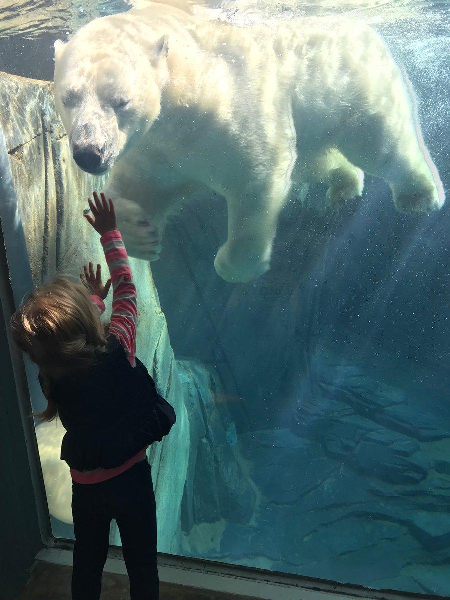 Saint Louis Zoo on Twitter: