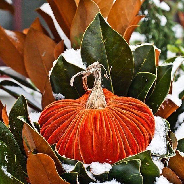 Plush Pumpkin's photo on #snowday