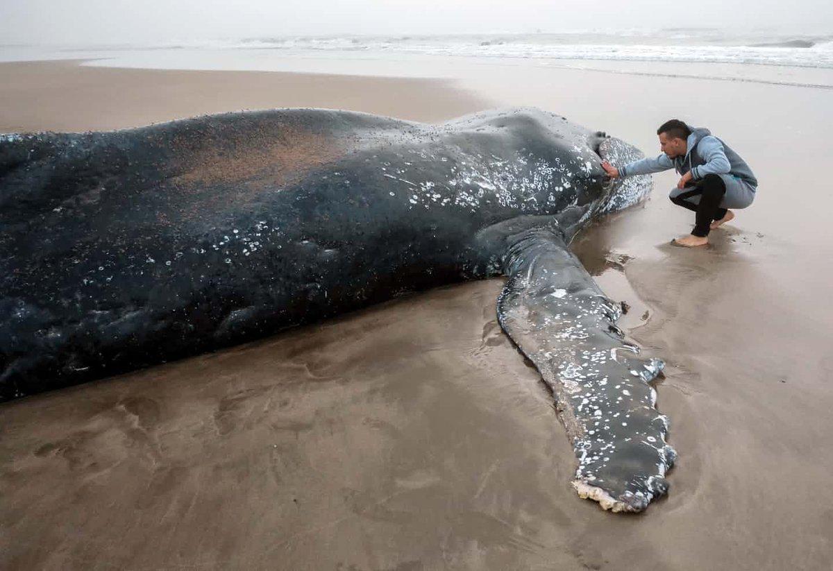 кит выбросился на берег картинка известна только шокирующим